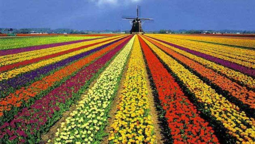 Голландия территория дизайна