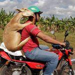 Обзорная экскурсия по районам Баваро, Пунта Кана — необычные экскурсии в Пунта-Кане