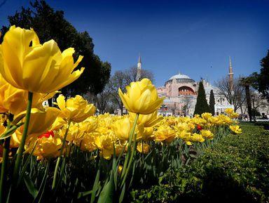 Тюльпанная история Турции