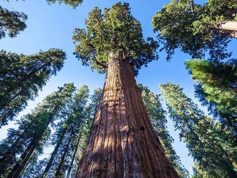 ИзЛос-Анджелеса влегендарный парк Секвойя