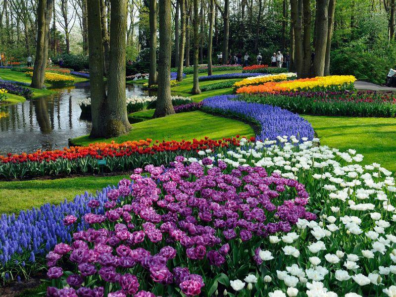 Экскурсия Прогулка поАмстердаму ипарк Кёкенхоф— заодин день