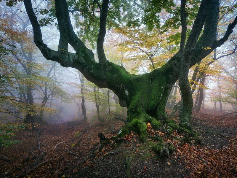 Сказки крымского леса width=