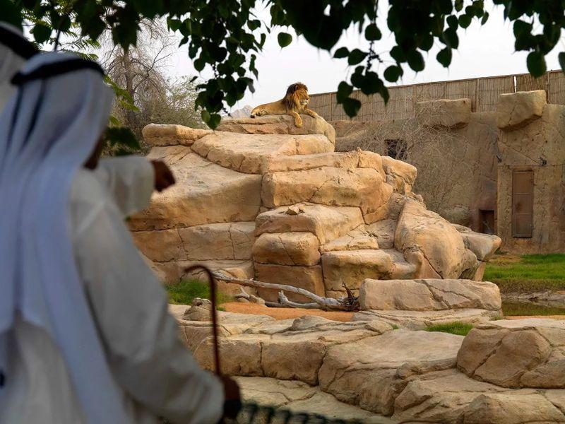 Экскурсия Цветущий Аль-Айн