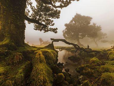 Сказочные леса Мадейры