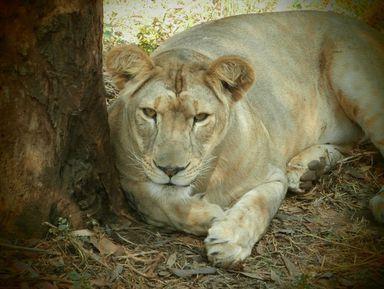 Мир животных ипаломнические места Индии за два дня