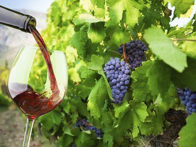 Винные туры в Ланге, Пьемонте