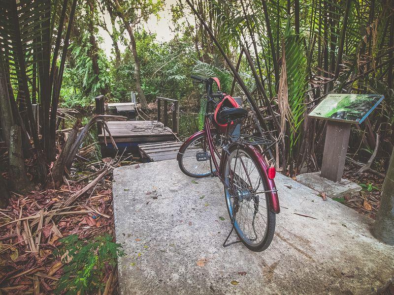Экскурсия Велотур по джунглям Банг Крачао