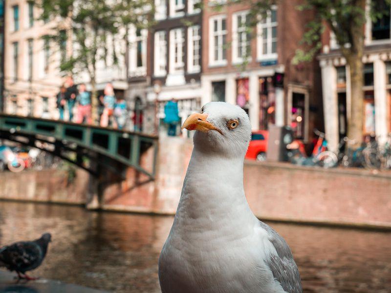 Амстердам — велосипедная столица Европы