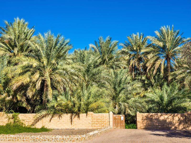 Экскурсия Город-оазис Аль-Айн: рай впустыне
