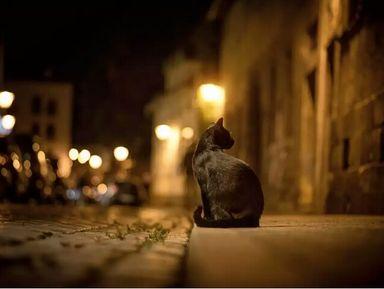 Ночная Тюмень
