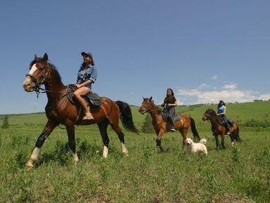 Конные прогулки по горному хребту