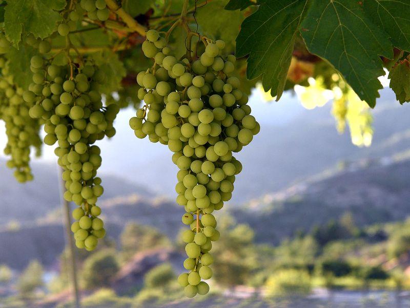 Экскурсия Виноделие Кипра