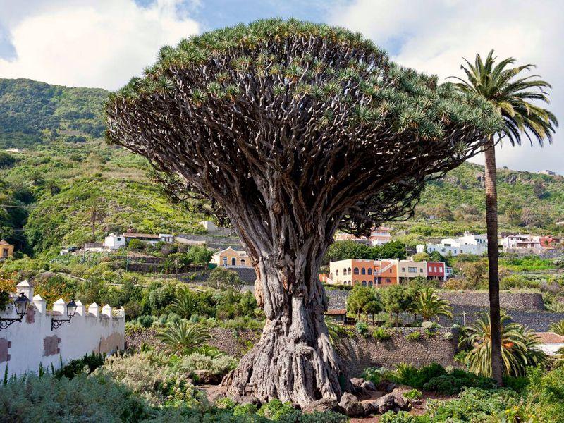 Весь Тенерифе и природный парк Анага за один день! width=