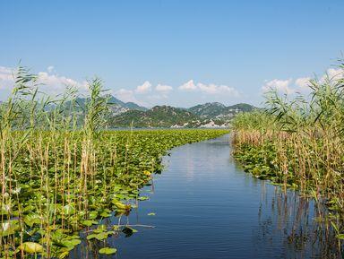 Идиллическая прогулка по Скадарскому озеру