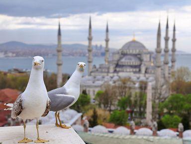 Стамбул: all inclusive