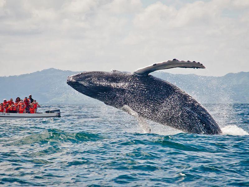 Экскурсия На встречу с синими китами!