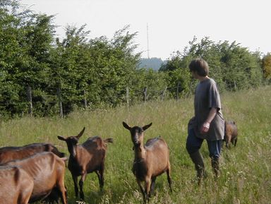 Поездка на ферму по производству сыров