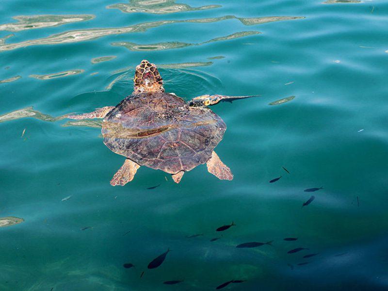 собака фото турция сиде остров черепах замена, цена стойки
