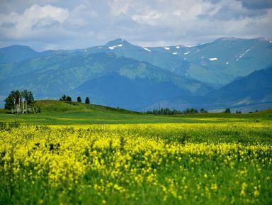 Уймонская долина и гора Белуха