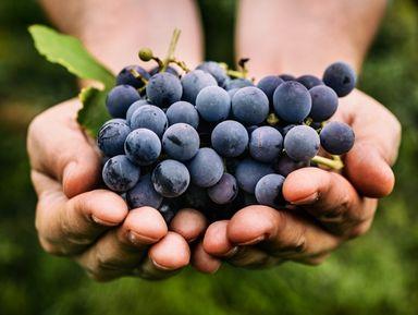 Вгости ксербским виноделам