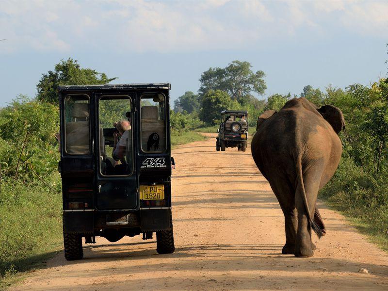Экскурсия Мозаика Шри-Ланки: сафари, форт Галле и драгоценные камни