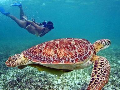 Волшебство подводного мира Мексики