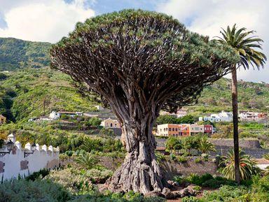Весь Тенерифе и природный парк Анага за один день!