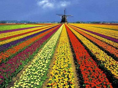 Экскурсии и гиды - Амстердам