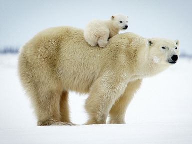 """Экскурсия """"Семейное путешествие помузею Арктики иАнтарктики"""": фото"""