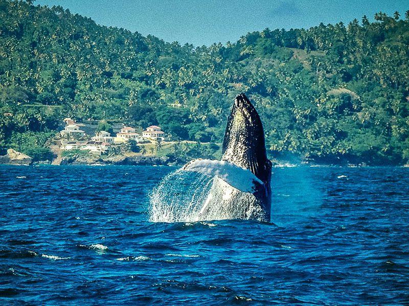 Экскурсия Райская Самана игорбатые киты
