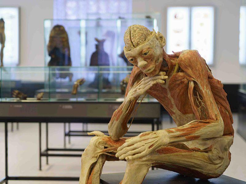 Фото Анатомический Эрмитаж: обзорная экскурсия-лекция
