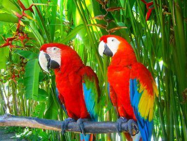 Природные сокровища и колорит Бали