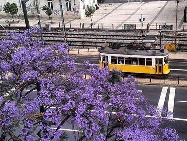 Прекрасный Лиссабон — пешая прогулка по центру города