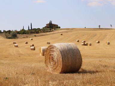 Гастрономическое путешествие по винодельням Тосканы
