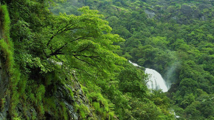 Тропические леса Индии | 490x870