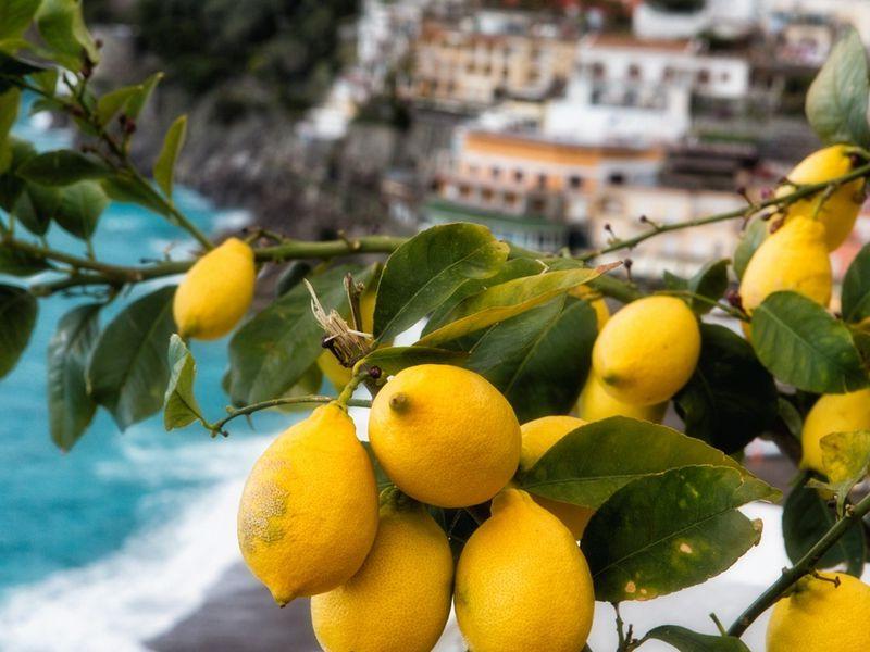 Амальфитанское побережье: лимоны илимончелло!