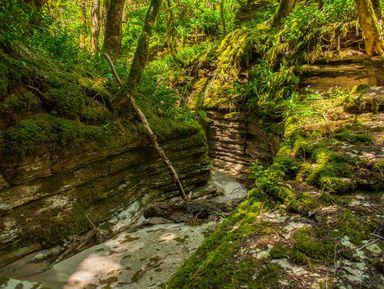 Заповедные места Хосты: хранители доисторической природы