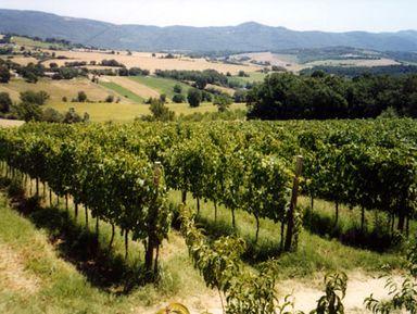 Оценить знаменитые вина Умбрии