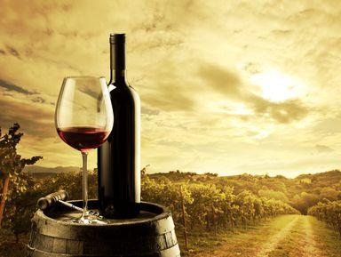Знакомство с великими винами Бордо. Винный тур в Медок
