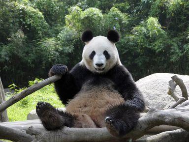 Экскурсия в Токио: Зоопарк Уэно