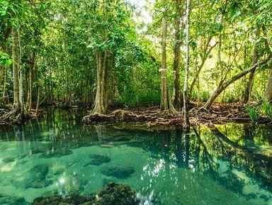 Экспедиция в мангровые джунгли