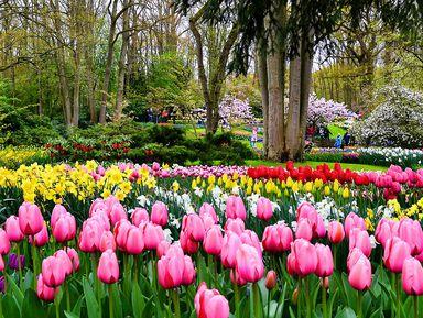 Поездка со знатоком в парк тюльпанов Кёкенхоф
