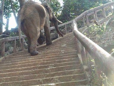 Провинция Даклак и поселок Лиен Сон – двухдневное путешествие