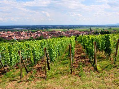 Экскурсия в Цюрихе: Из Цюриха в Эльзас: винодельни в окрестностях Кольмара