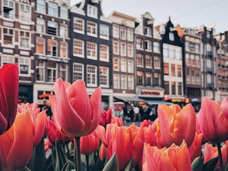 Экскурсия Амстердам с нуля