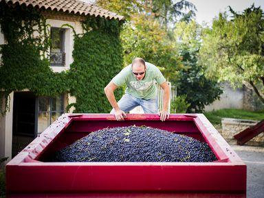 Экскурсия в Монпелье: Из Монпелье — на живописную французскую винодельню!