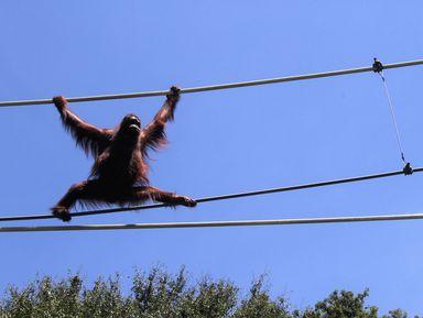 Экскурсия в Токио: Львиное сафари и прогулки с орангутанами в зоопарке Тама