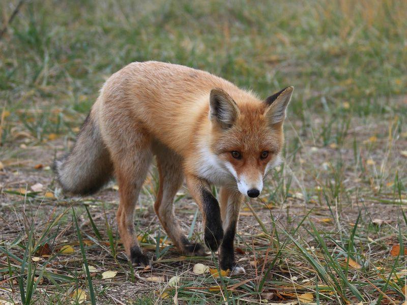 Керженский заповедник — путешествие в мир природы