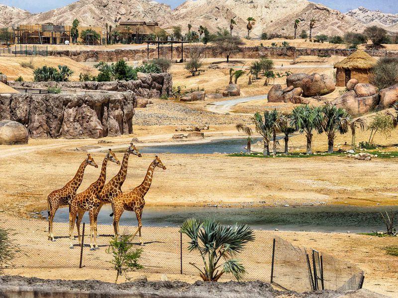 Экскурсия Зоопарк игорячие источники Аль Айна