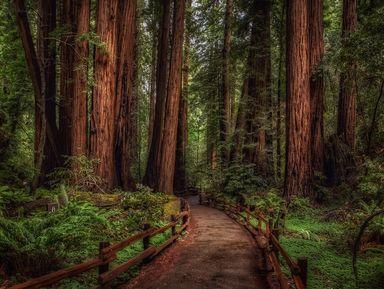 Экскурсии и гиды - Сан-Франциско